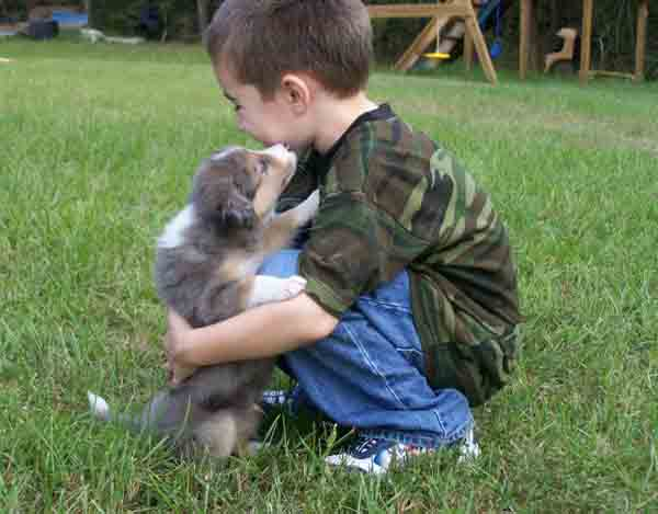 Border Collies and Children: Are They Good With Them?