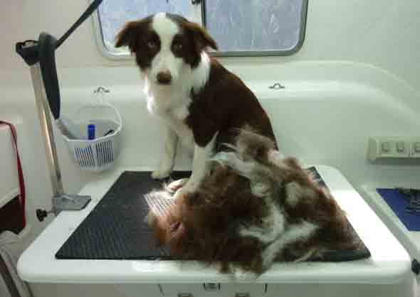 List Of Dog Breeds That Don T Shed Hair Excessively