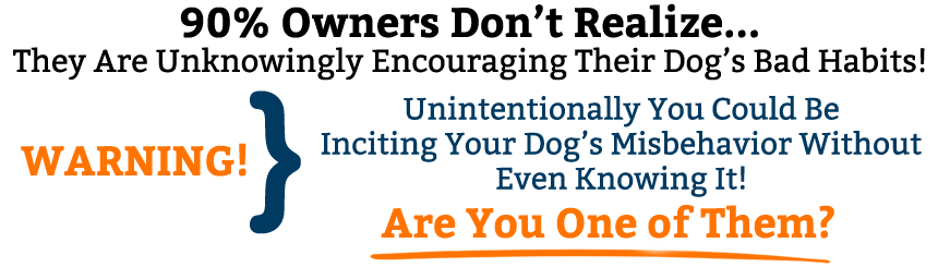 """""""Stubborn To Obedient: Border Collie Owner's Guide ..."""