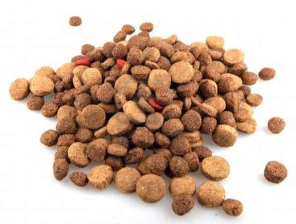 border collie dog food nutrition