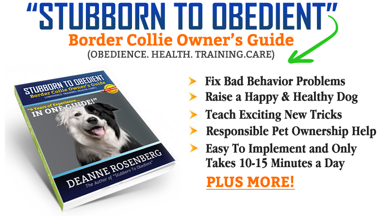 Stubborn to obedient border collie owners guide stubborn to obedient border collie owners guide is the most in depth and comprehensive guide that will help you raise your dog from puppy to a life fandeluxe Epub