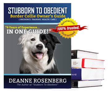 stubborn to obedient border collie owner s guide rh lovelybordercollie com border collie owners guide uk border collie owners guide alice singer