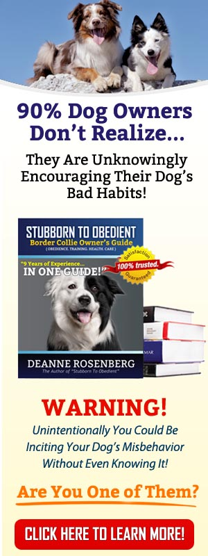 12 imperative border collie training steps and commands for pet owners rh lovelybordercollie com border collie owners guide book border collie owners guide alice singer